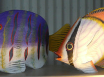 Fish Decor